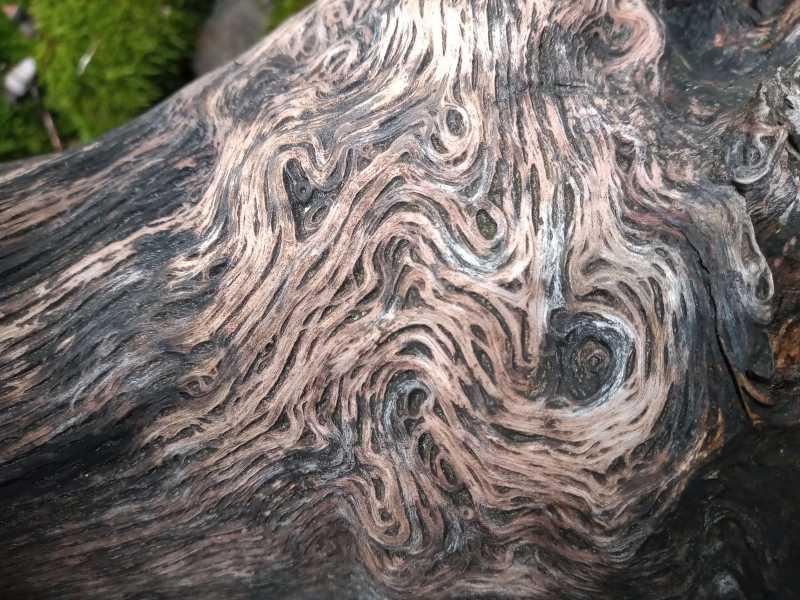 Muster im Baum